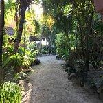 Фотография Mayan Beach Garden