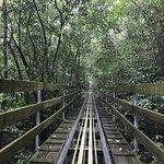 Rainforest Adventures Jamaica Foto