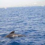 une baleine à proximité du catamaran
