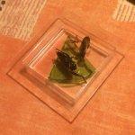 découverte insecte