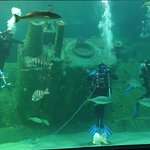 Divers in the large tank