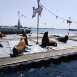 Get close to wildlife that call San Diego Harbor home!