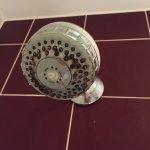 Filthy shower head