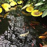 ภาพถ่ายของ Garfield Park Conservatory