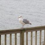 Photo de Crow's Nest Resort
