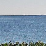 Foto Grand Hyatt Tampa Bay
