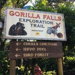 A great place to see the 9 gorillas that inhabit 2 pods