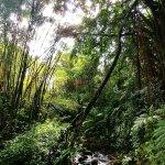 Foto de Akaka Falls State Park