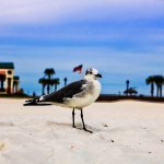 Foto de Pensacola Beach