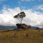 Lone tree, La Gran Sabana