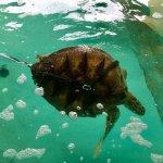 Zdjęcie Sea Turtle, Inc.