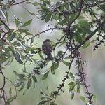 Biotopo del Quetzal의 사진