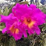 Photo de Phuket Orchid Farm
