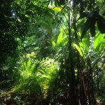 Rain forest view