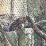 Photo of Audubon Zoo