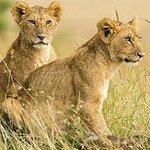 SERENGETI  NATIONAL PARK                         Is a Tanzania National park in the Sereng