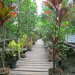 Bakhawan Eco-park and Research Centre resmi