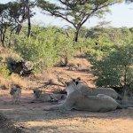 Foto de Mhondoro Game Lodge