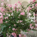flowers at the Gloriette