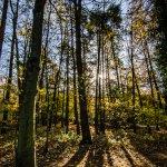 Sunlight breaks through the tall trees