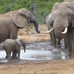 Bilde fra African Sky Safaris & Tours