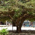 Photo of Neptune Pwani Beach Resort & Spa