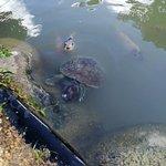Turtle River Park resmi