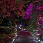 GLOW Illuminations5
