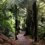 Tree ferns along the path.