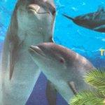Photo de Dolphin Cove