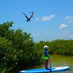 Stand Up Paddleboarding (SUP) Mayan Mangrove Tour