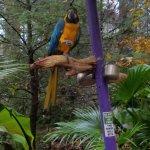 Love  all  the birds