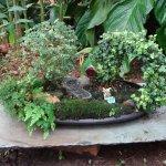 Foto de Matthaei Botanical Gardens