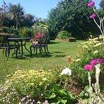 Beautiful Toorak garden