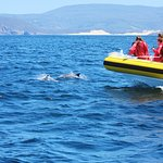 Pods of dolphins swam with the boat