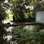 Photo de Colo I Suva Rainforest Eco Resort