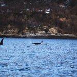 We watched killer whales in Skjervøy last week
