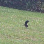 sur le parcours du golf un écureuil faisait des galipettes!!