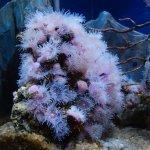 L'Aquarium de Barcelona Foto