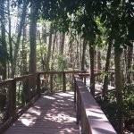 The well-maintained boardwalk; shaded for a beautiful walk even on a hot day.