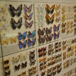 Part of insects collection
