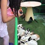 Foto di Farm Chokchai