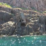 scary face on rocks