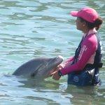 Dolphin Discovery, Costa Maya