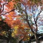 Bilde fra Taizoin