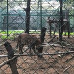 Some clicks at the Bannerghatta Safari