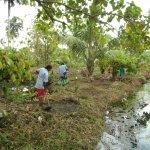A Working Plantation