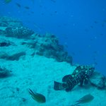 Photo of Aquasport Diving
