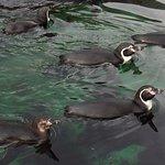 Bilde fra Atlanterhavsparken