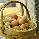 CharCol Spring Pastured Egg Farm